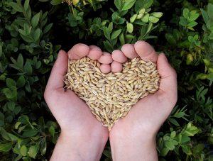 ressources vitales chakra coeur énergies nature vie