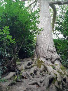 arbre racines profondes ancrage enracinement
